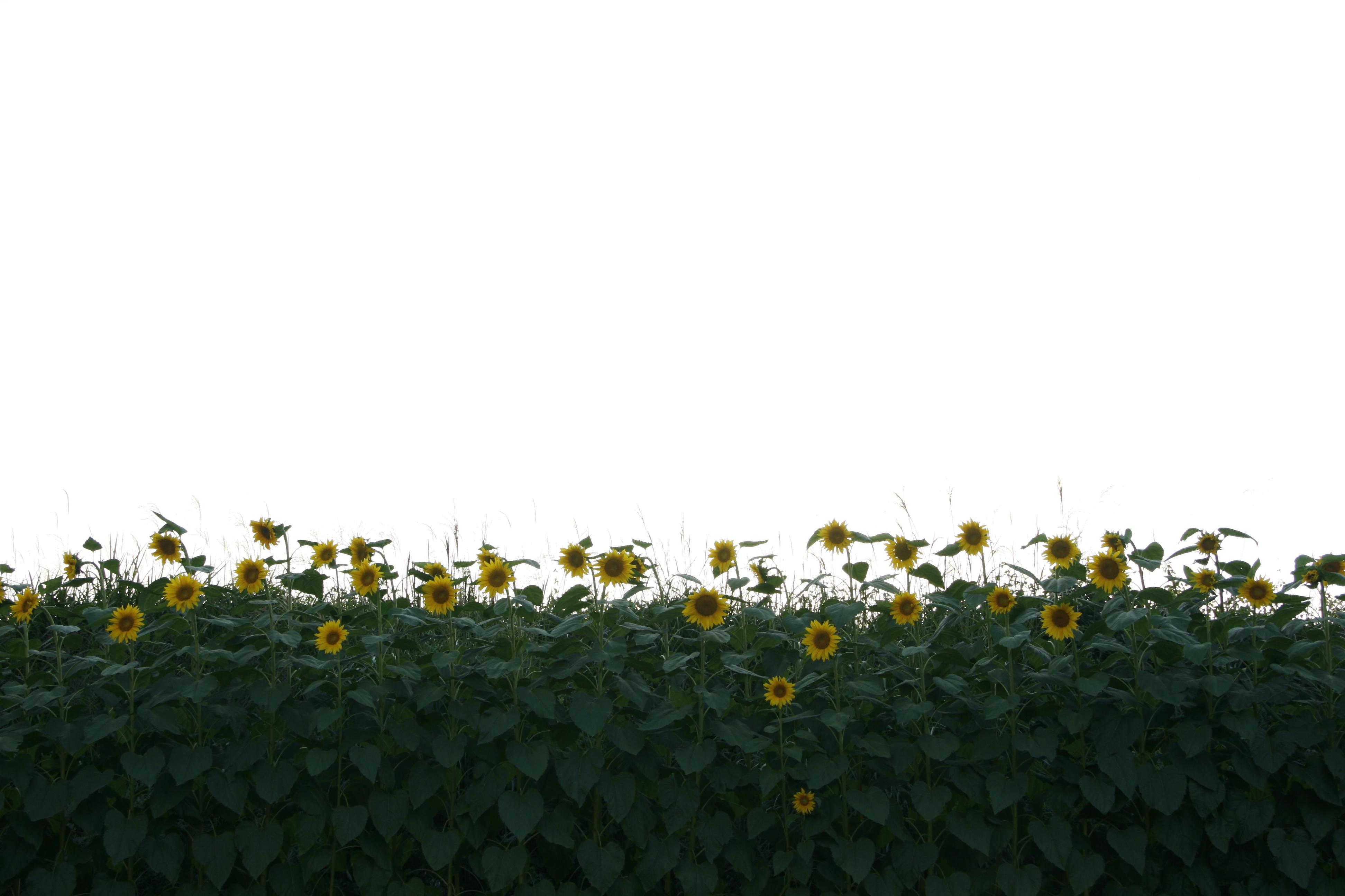사진 141.jpg